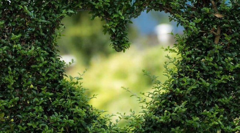 Planter de la végétation dans son jardin